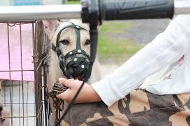Lake County Florida Animal Removal