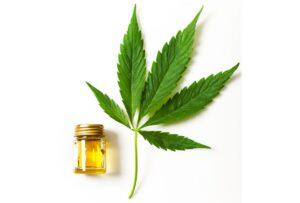 purchasing cannabis blossom