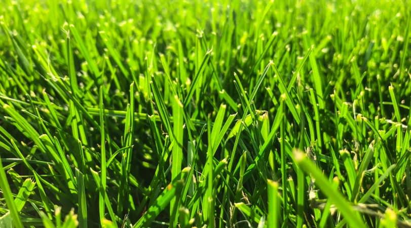 Weed Killer That Won't Kill Grass